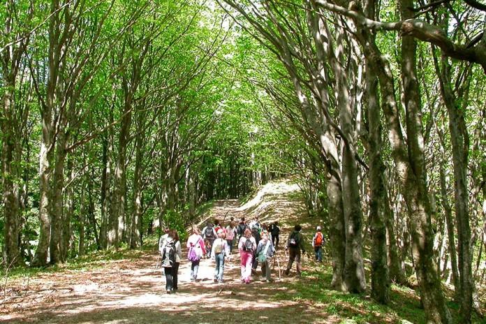 scursionisti parco foresta