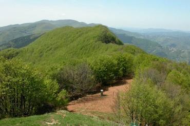 Oltre 30 tour operator italiani e stranieri alla scoperta del Parco delle Foreste Casentinesi