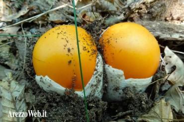 Mangiare i funghi in sicurezza si può: basta far controllare il prodotto ai micologi della Asl8