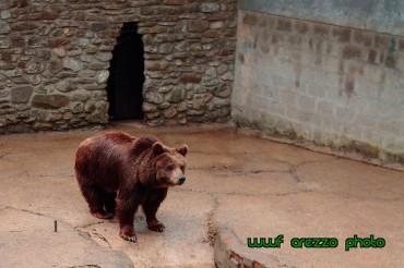 """Zoo di Poppi: """"rinviato a giudizio il proprietario e direttore per il reato di maltrattamento di animali"""""""