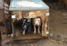 Cani - Sequestro forestale