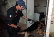 carabinieri - unita cinofila