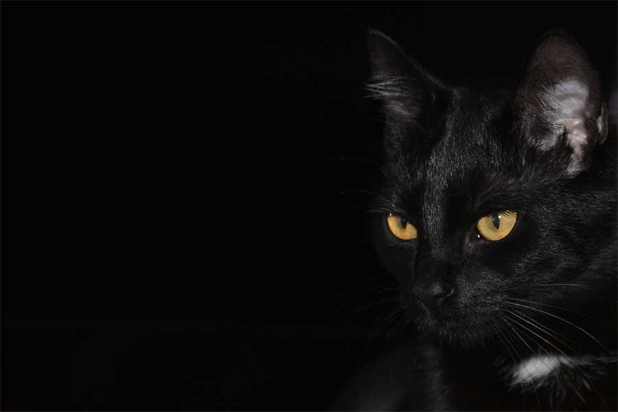 Perché il 17 novembre è il giorno del gatto nero?