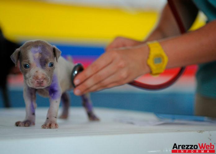 veterinario che visita un cucciolo - animali - vaccini