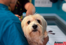 Veterinario che visita un cane per vaccinarlo -animali