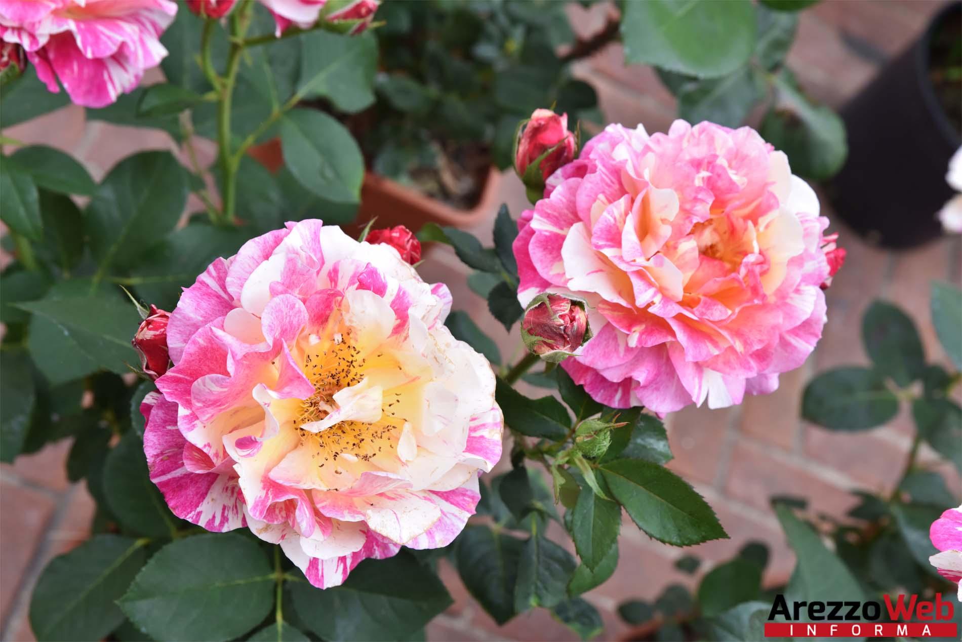 """Immagini Piante E Fiori coronavirus, """"via libera alla vendita di piante e fiori"""