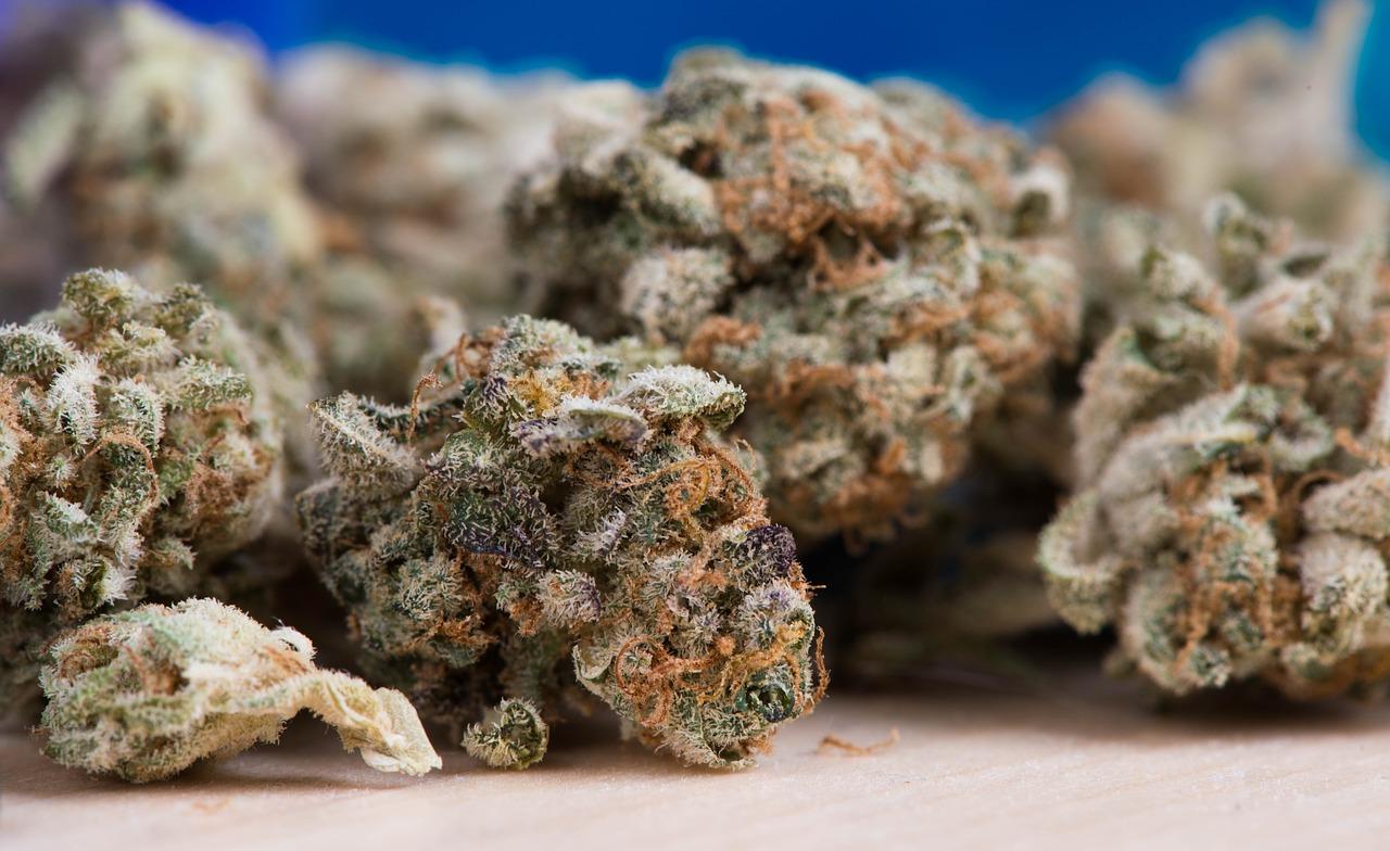 Cannabis 2.jpg